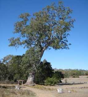 The Bilstons Tree